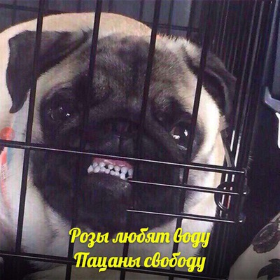 Димава Робьев