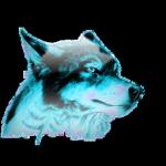 BLUE-WOLF TURK®
